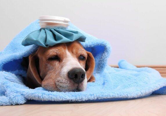 Cachorro-gripe-Petlove
