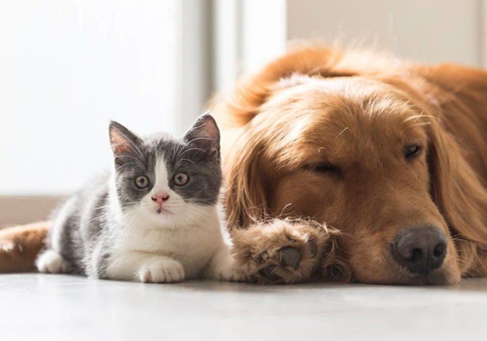 JPEG-cachorro-gato-feira-de-animais-jaragua-do-sul-super-abril