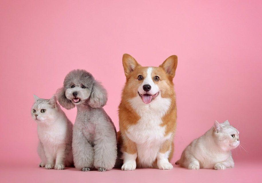 pets_cães_gatos_adoção (2)