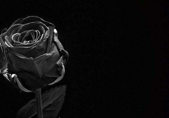 luto_rosa preta